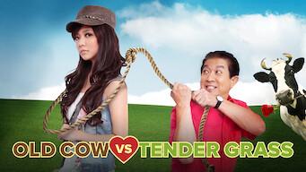 Old Cow vs Tender Grass